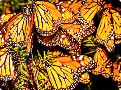 Visit Monarch Butterflies in Valle de Bravo
