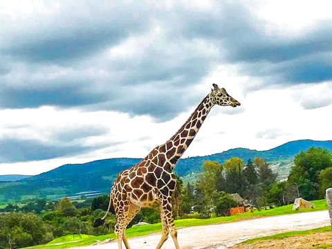 Africam Safari and Tour in Puebla