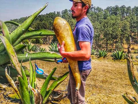 Desde Tlaxcala: Tour del Pulque
