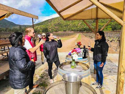 Basic Wine Workshop in Ensenada