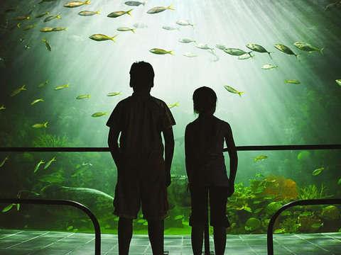 City Tour by Veracruz + Aquarium