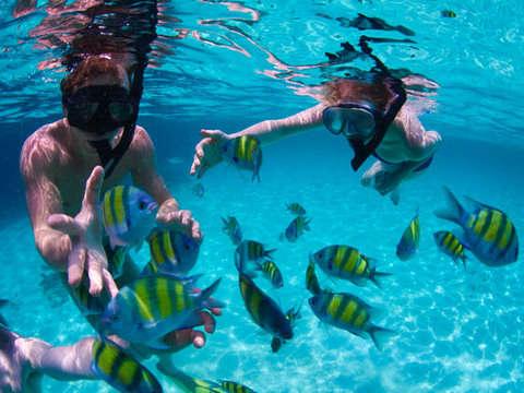 Snorkel Vida Submarina en los Cabos