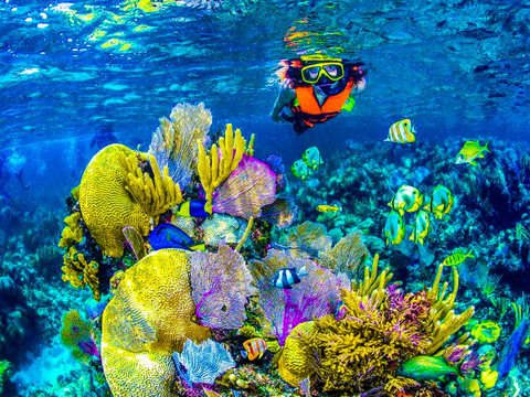 Snorkeling Adventure in Cancun