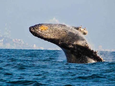 Desde Mazatlán: Observación de Ballenas