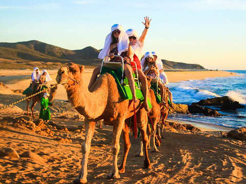 Camel Safari on the Cabos Beaches