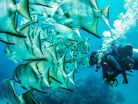 Discover Scuba Diving - Baptism