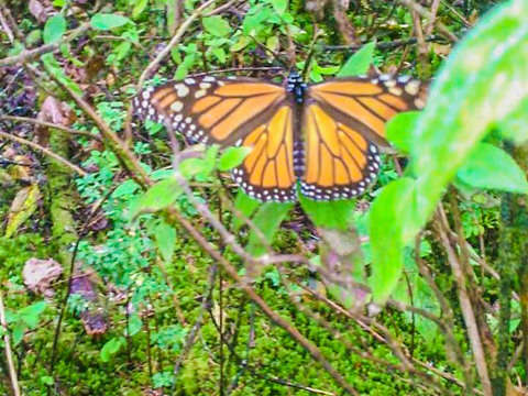 From Cdmx: Monarch Butterfly and Valle de Bravo + Food